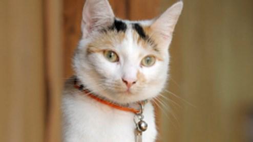 Eine Katzenleiter bringt Schnurrli sicher in den dritten Stock.