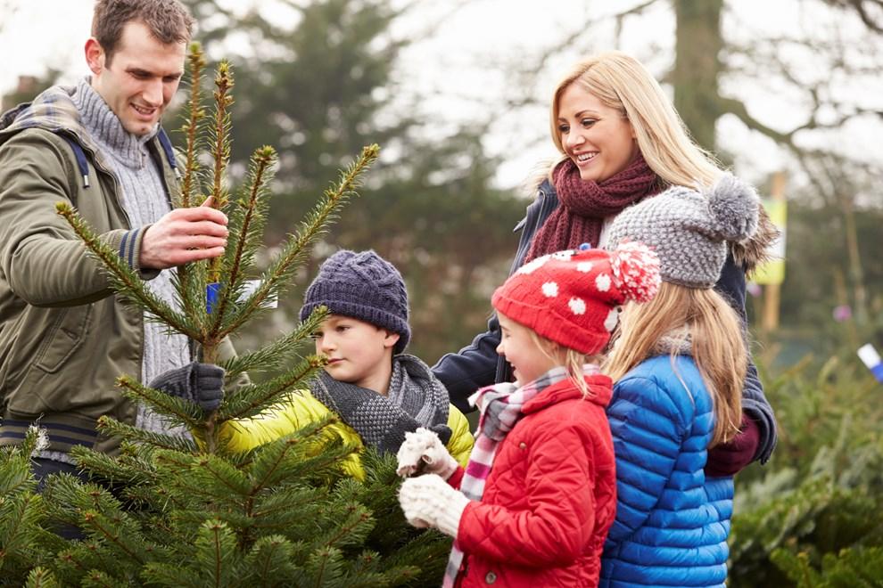 weihnachten so bliebt der christbaum l nger frisch. Black Bedroom Furniture Sets. Home Design Ideas