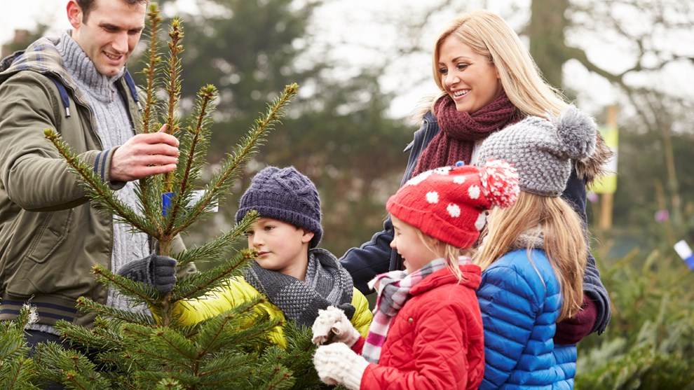 weihnachten so bleibt der christbaum l nger frisch. Black Bedroom Furniture Sets. Home Design Ideas