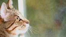 Worauf ist bei Katzenklappen zu achten?