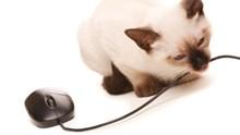 Was sind mögliche Gefahren für Haustiere?