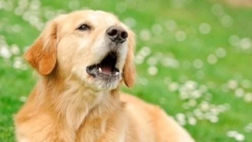 Wenn der Hund zu laut bellt, freut das die Nachbarn nicht.