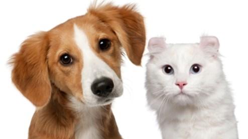 Nicht jeder freut sich über Haustiere in der Nachbarschaft.