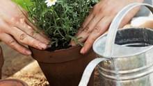 Tipps zur Pflege von Topfpflanzen