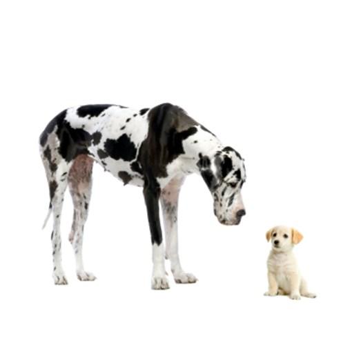 De combien de place un chien a-t-il besoin?