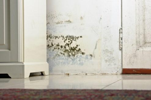 de la moisissure dans l appartement. Black Bedroom Furniture Sets. Home Design Ideas