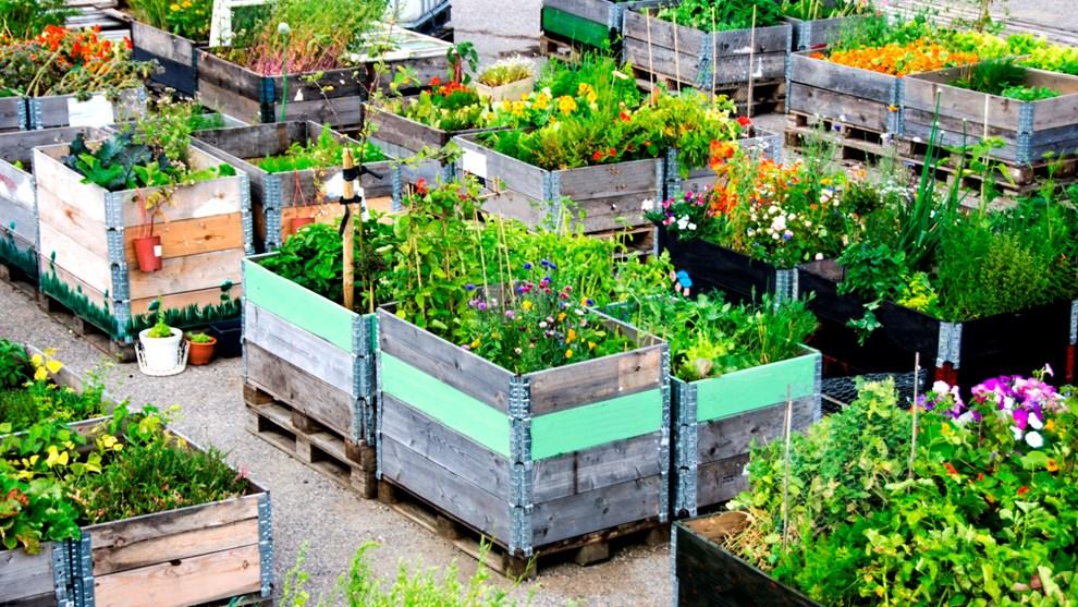 Berühmt Urban Gardening: Der Garten in der Stadt #LD_55