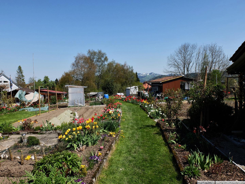 Il mio giardino in città l orto privato