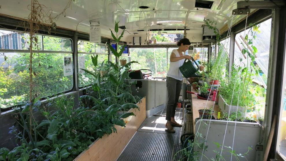 Katja Jucker, verantwortlich für den Garten im alten Tramdepot, kümmert sich um die Pflanzen im Bus.