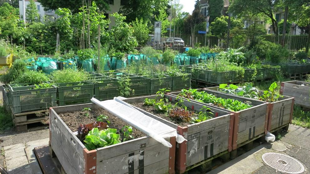 Ob Einkaufswagen, Gemüsekiste, Sack oder Palette - eine Pflanzeinheit kann im  alten Tramdepot für 10 bis 20 Franken im Jahr gemietet werden.