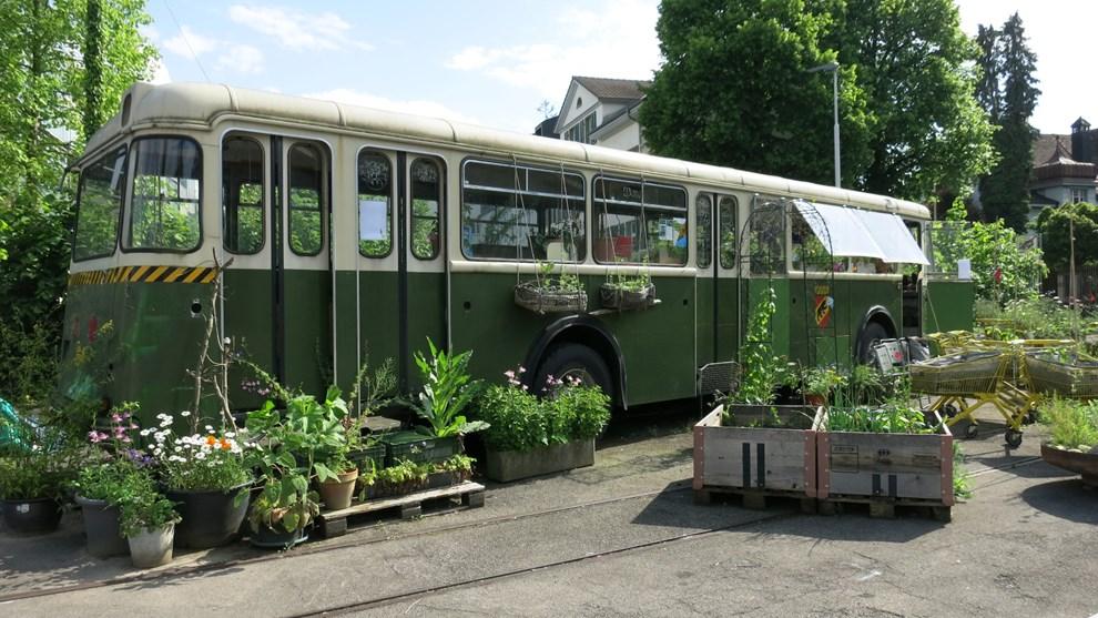 Der alte Bus dient heute als Gewächshaus und schützt die empfindlichen Tomaten.
