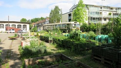 Gemüse anstatt Trams