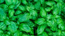 Saisontabelle: Welche Kräuter werden jetzt angepflanzt?